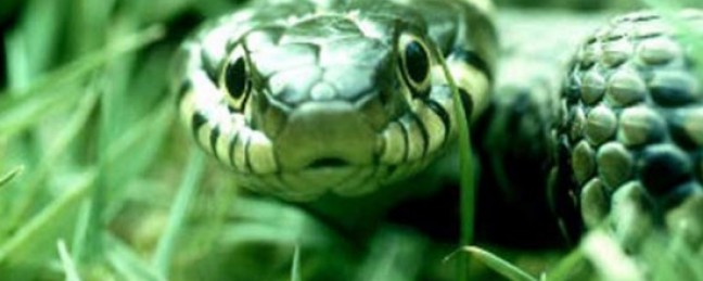 """Capital G """"Snakes"""" [DOPE!]"""